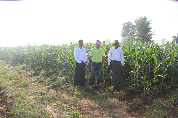 cornseed1